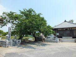 志那漁港近くにある蓮海寺