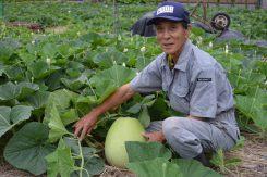代々受け継ぐかんぴょう農家の谷口治郎さん